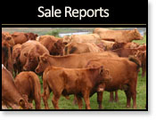Latest Sale Reports
