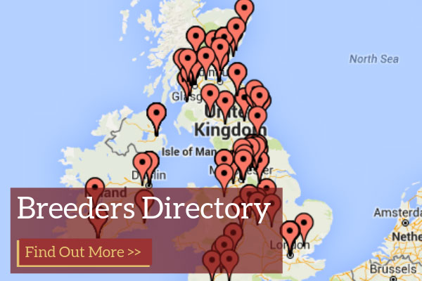 Luing Cattle Breeders Directory