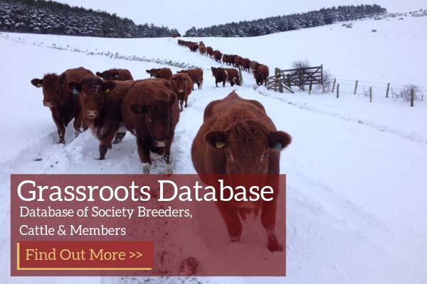 Luing Cattle Society Grassroots Database