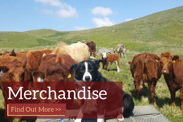 Luing Cattle Society Merchandise For Sale